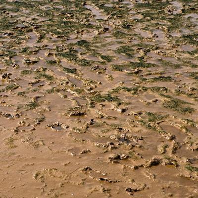 滩涂污染损失赔偿评估报告