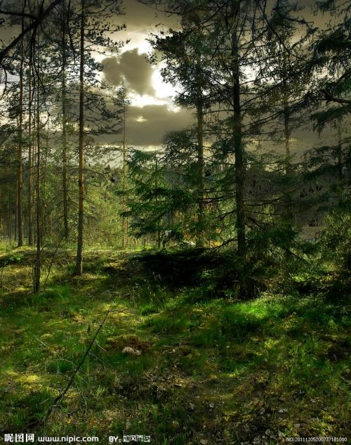 森林经营方案论证评估报告机构