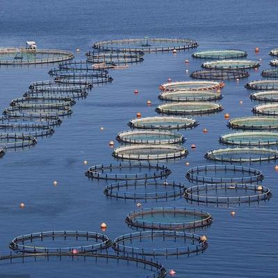 三文鱼养殖评估方法