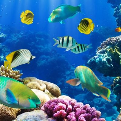 海洋污染赔偿鉴定、海洋海域抵押贷款评估
