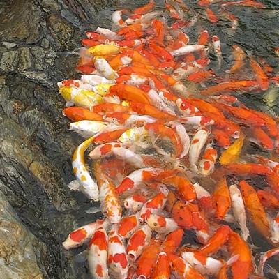 观赏鱼征收评估
