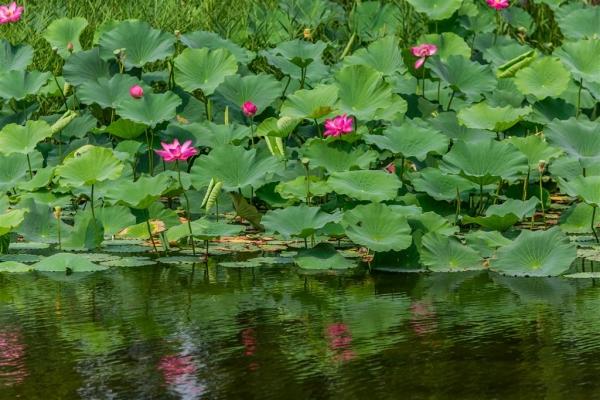 池塘拆迁、征收评估