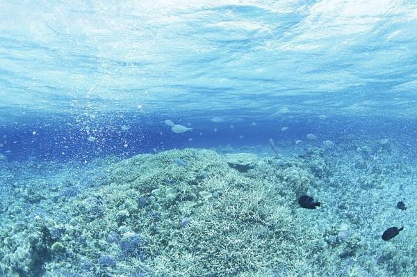 海域生态评估