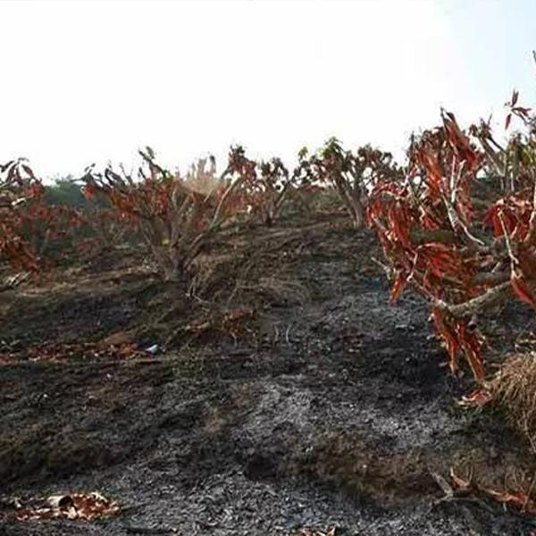 烧毁果树鉴定;全国人民法院委托专业司法鉴定评估机构